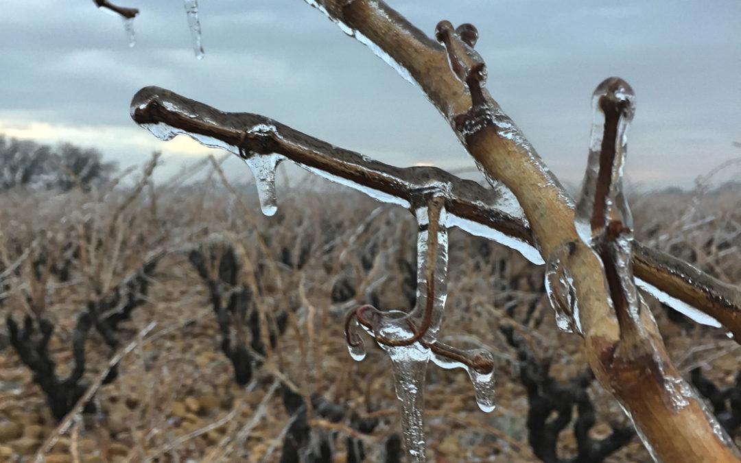 Châteauneuf-du-pape dans la glace